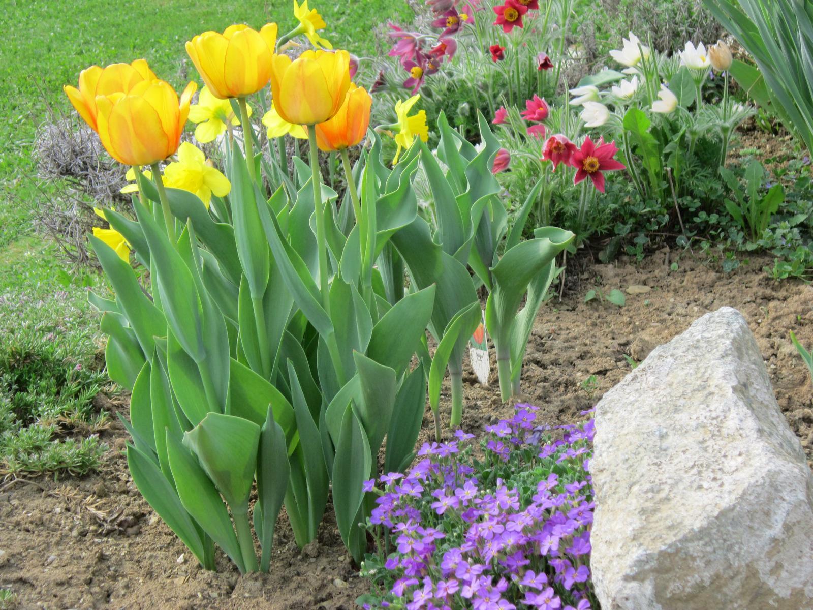 Pozvanie do našej jarnej záhrady - Obrázok č. 7