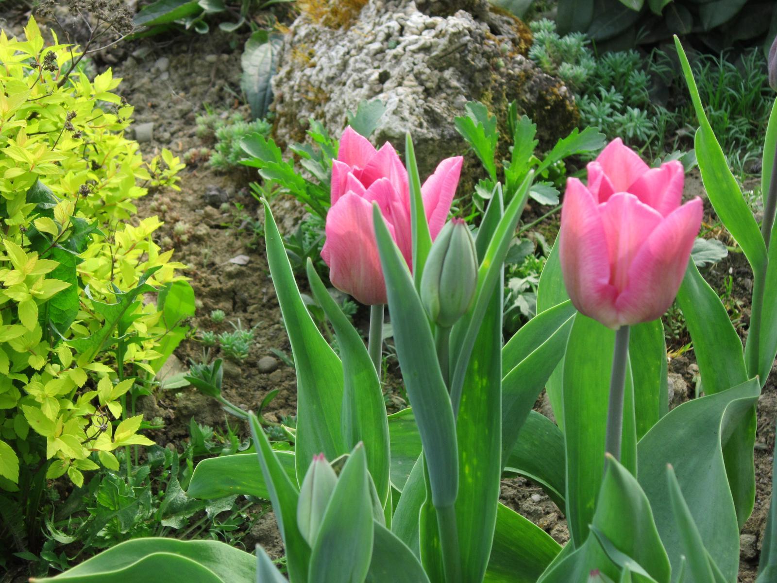 Pozvanie do našej jarnej záhrady - Obrázok č. 9
