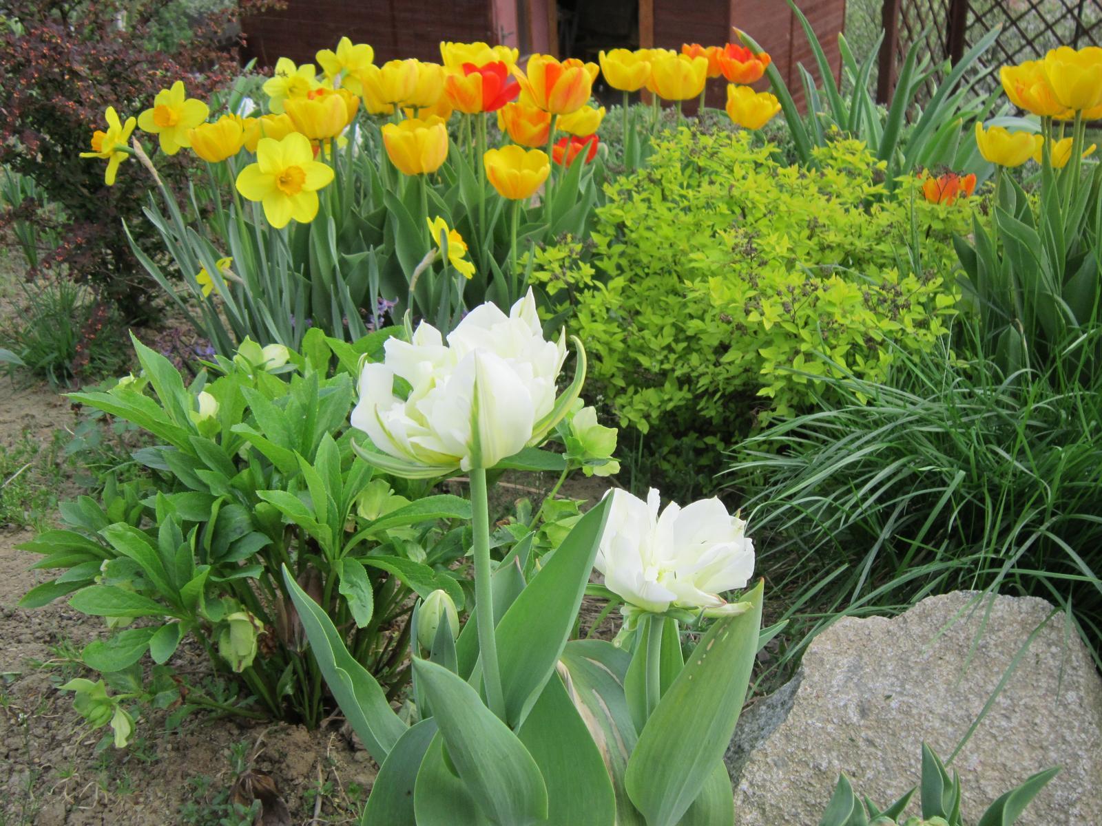Pozvanie do našej jarnej záhrady - Obrázok č. 10