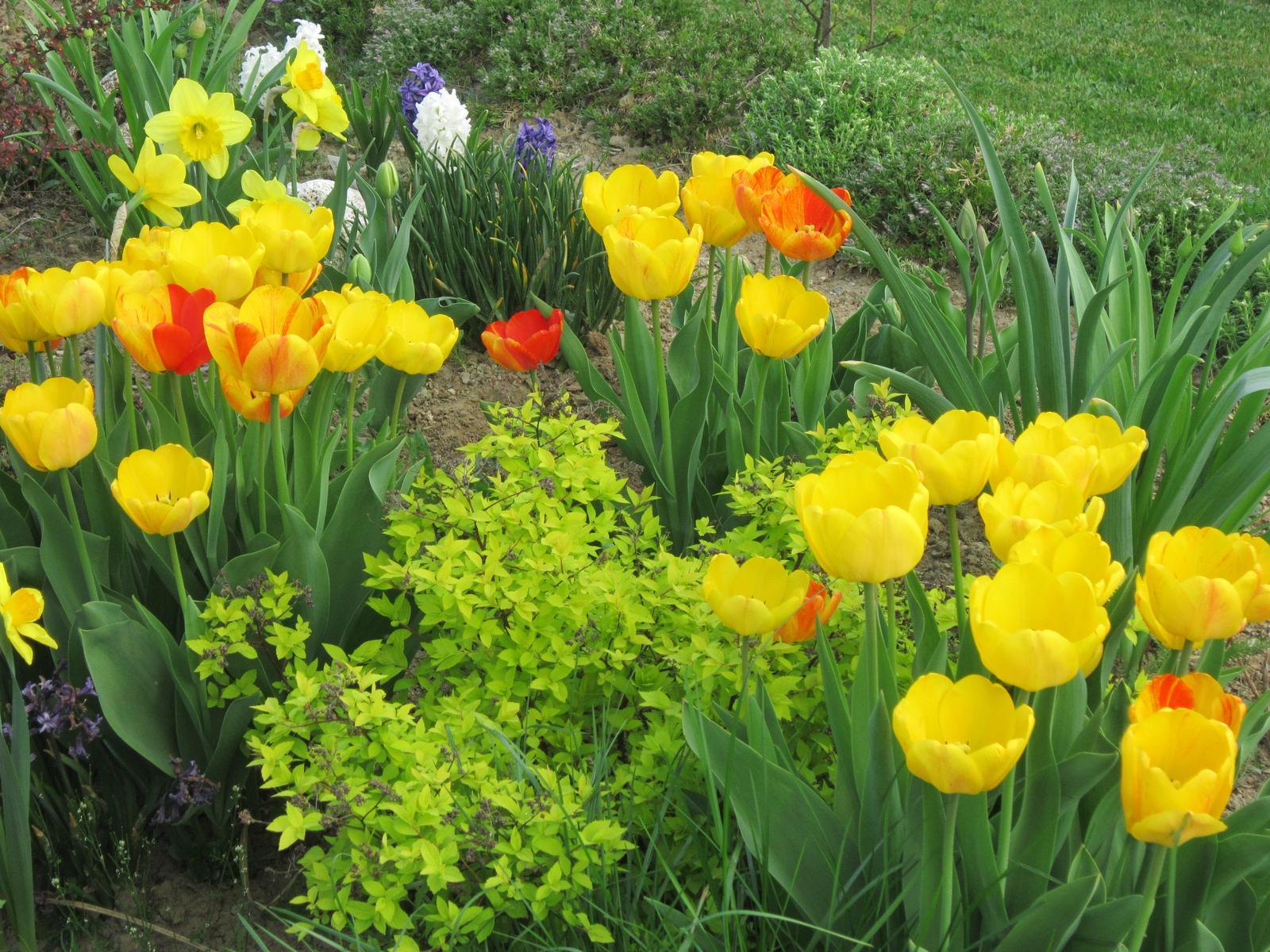 Pozvanie do našej jarnej záhrady - Obrázok č. 11