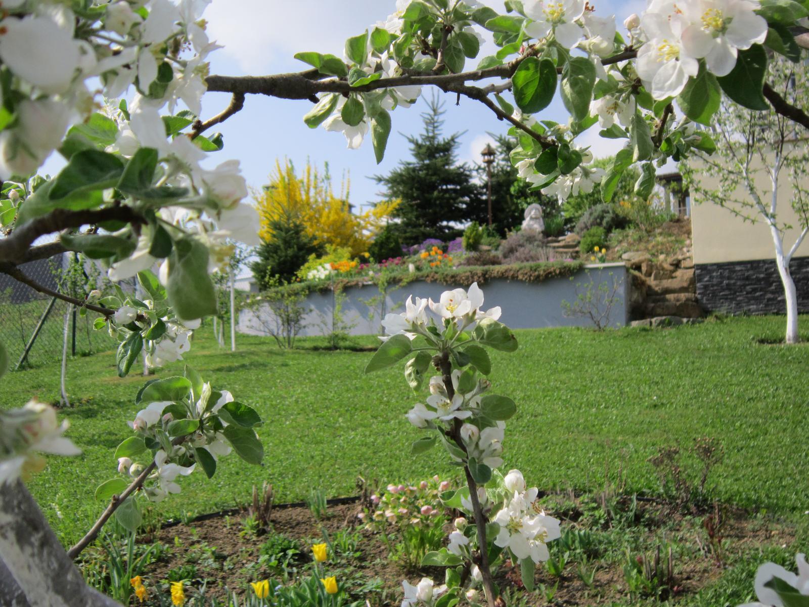 Pozvanie do našej jarnej záhrady - Obrázok č. 12