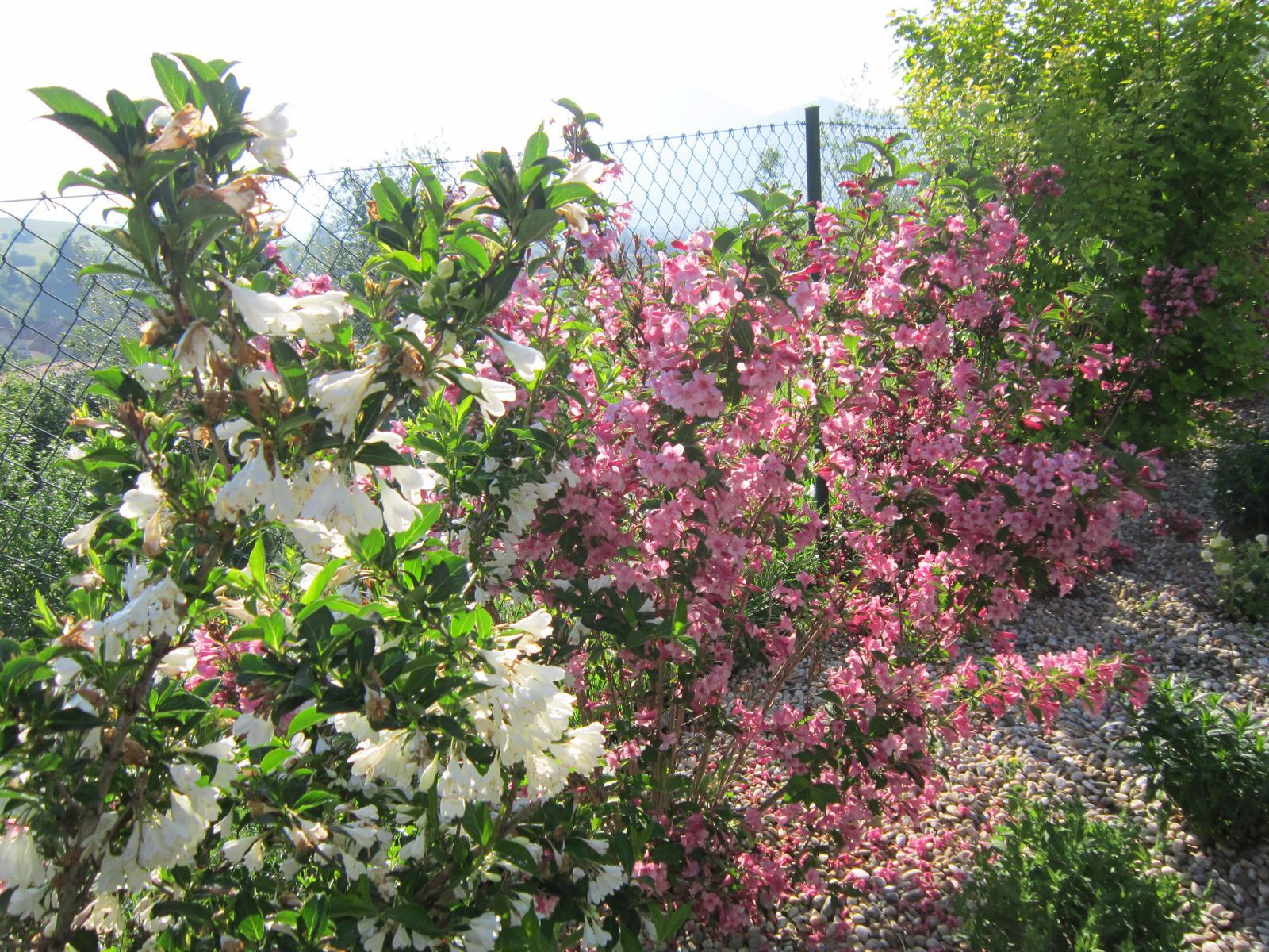 Pozvanie do našej jarnej záhrady - Obrázok č. 25