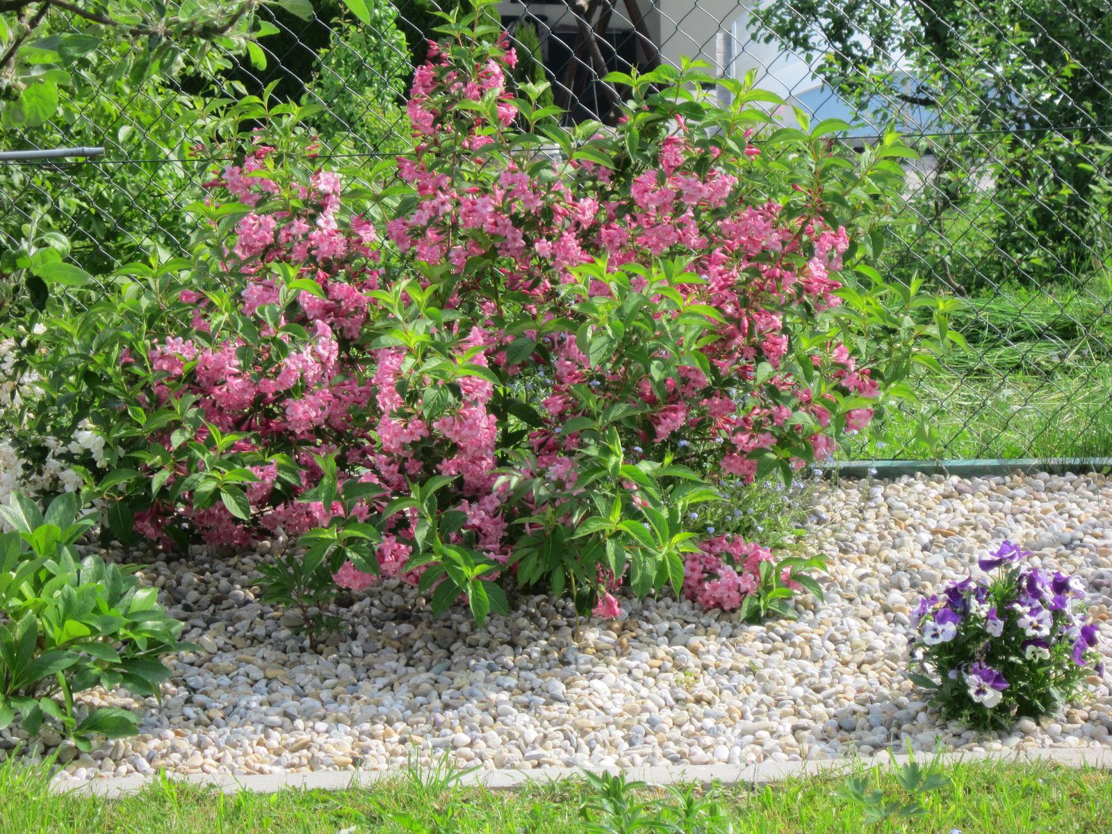 Pozvanie do našej jarnej záhrady - Obrázok č. 29