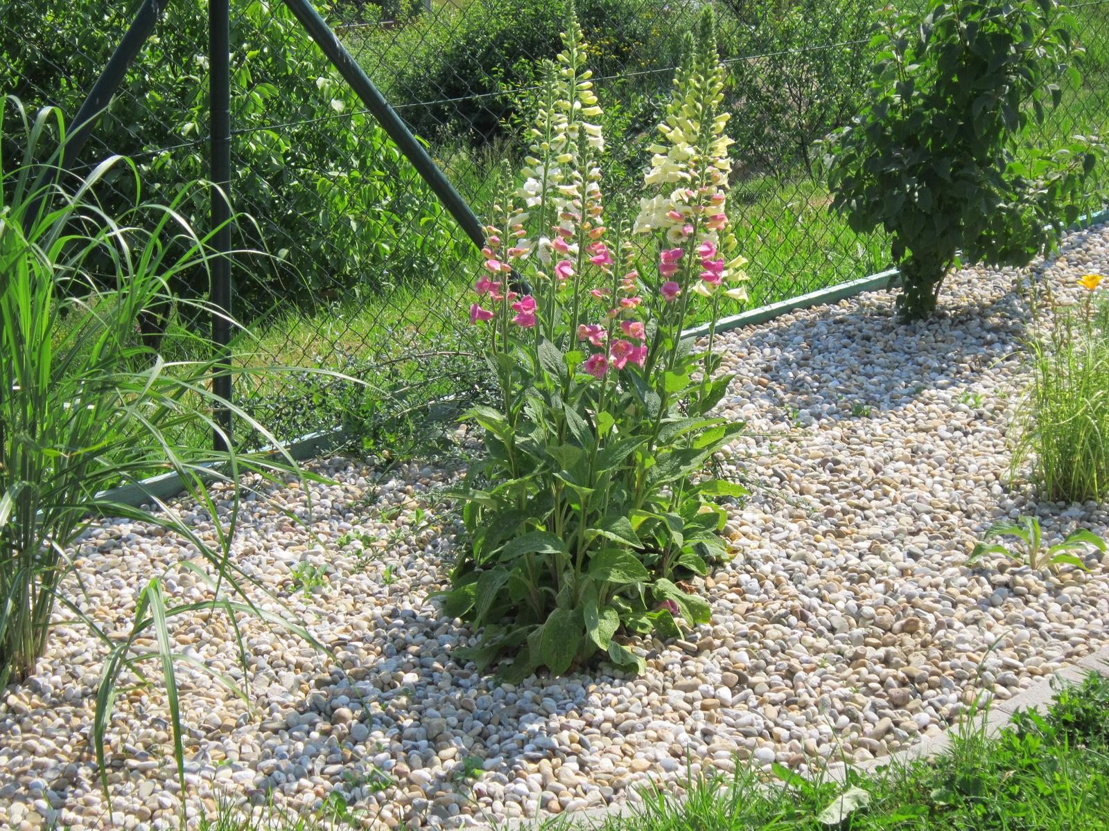 Pozvanie do našej jarnej záhrady - Obrázok č. 30