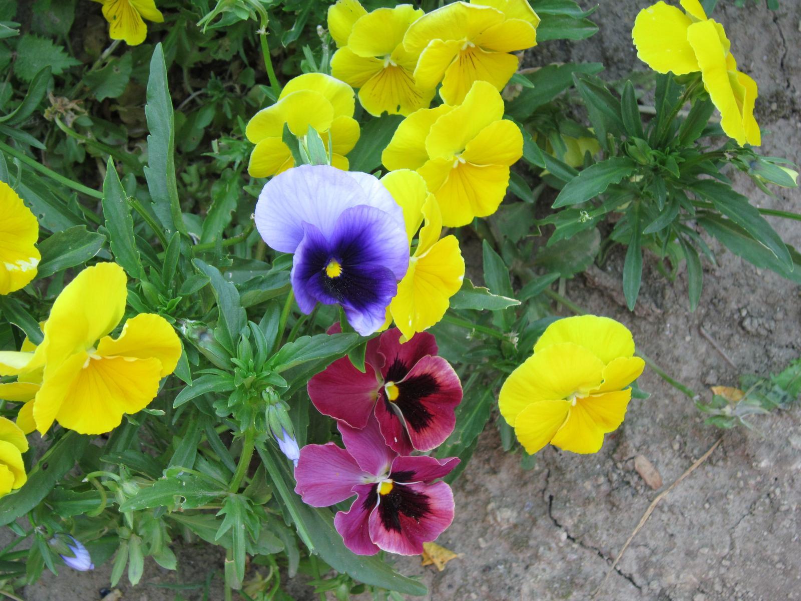 Pozvanie do našej jarnej záhrady - Obrázok č. 31