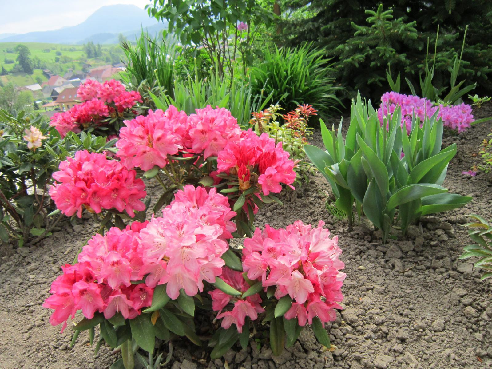 Pozvanie do našej jarnej záhrady - Obrázok č. 37