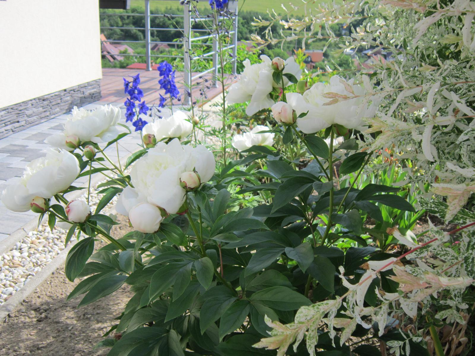 Pozvanie do našej jarnej záhrady - Obrázok č. 47