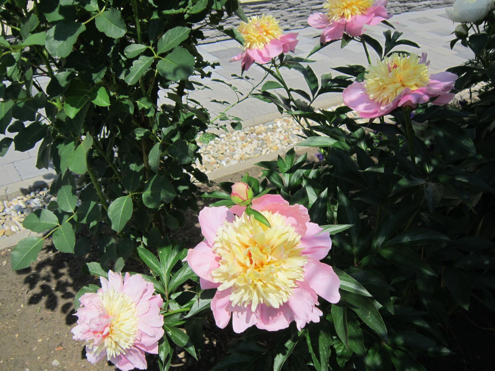 Pozvanie do našej jarnej záhrady - Obrázok č. 53