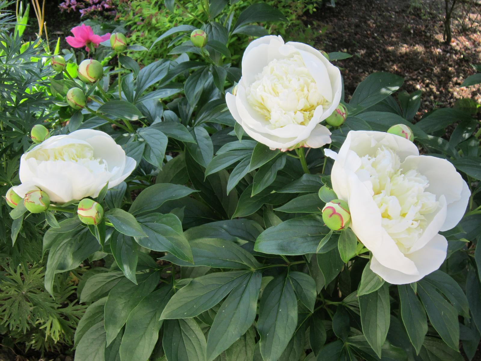Pozvanie do našej jarnej záhrady - Obrázok č. 56