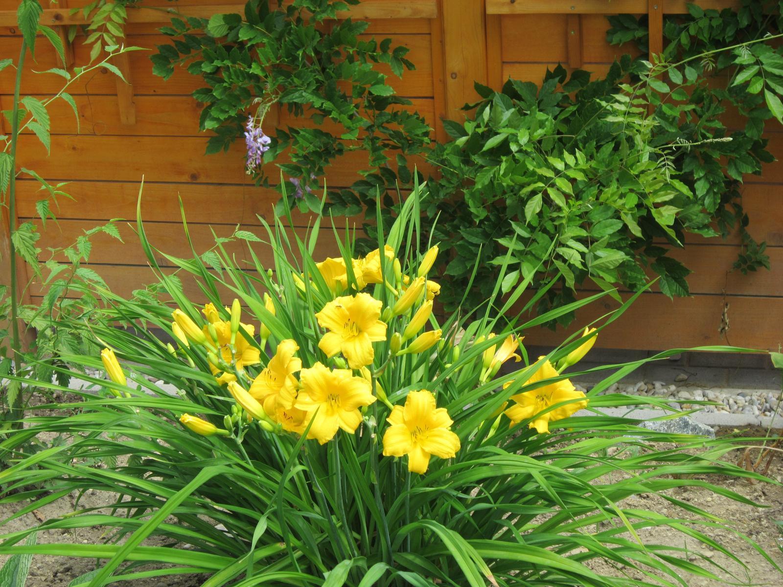 Pozvanie do našej jarnej záhrady - Ľaliovka