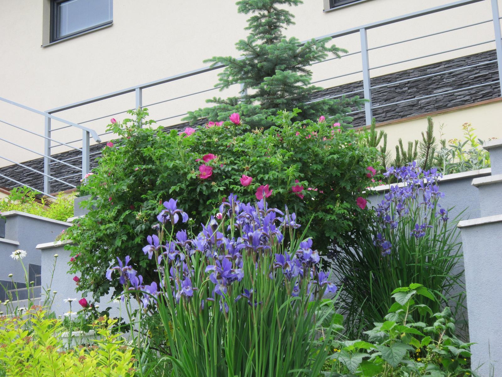 Pozvanie do našej jarnej záhrady - Obrázok č. 63