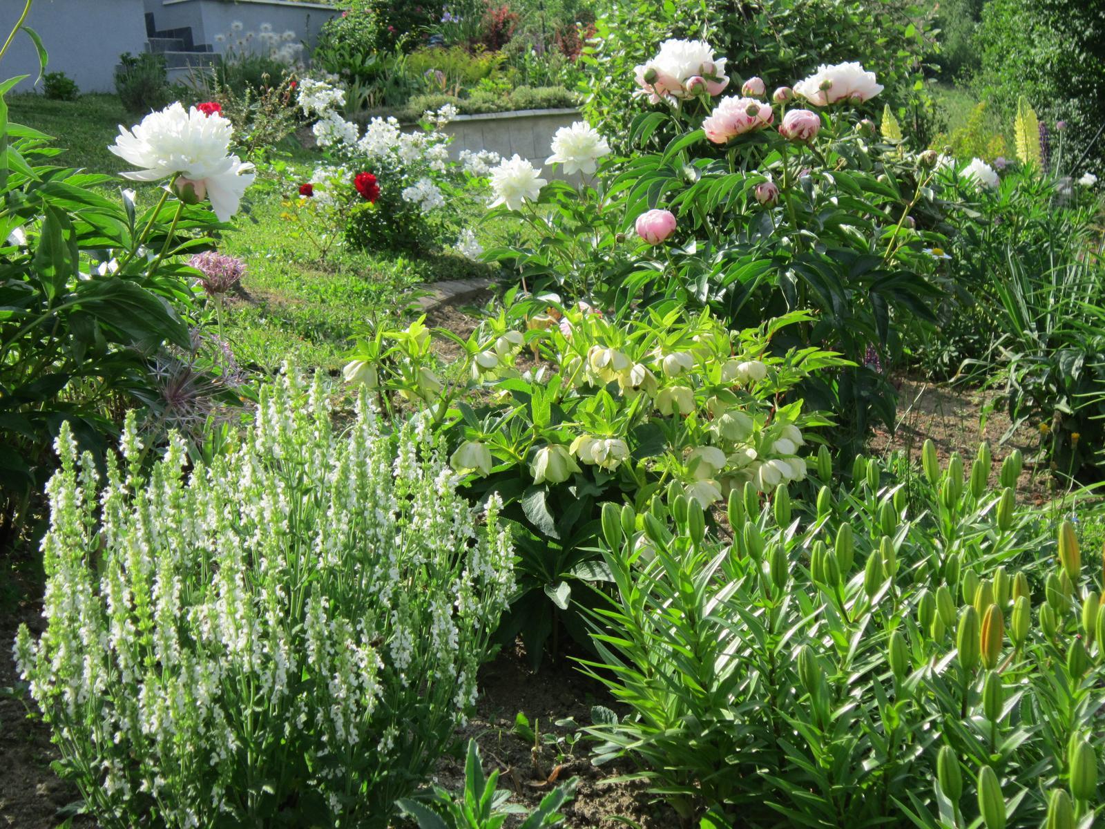Pozvanie do našej jarnej záhrady - Obrázok č. 64