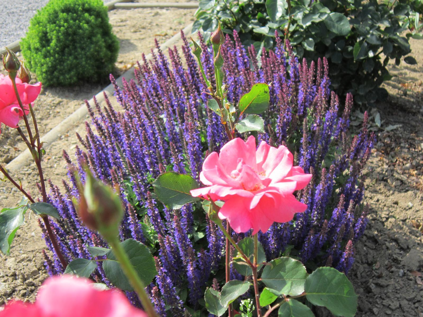 Pozvanie do našej jarnej záhrady - Obrázok č. 65