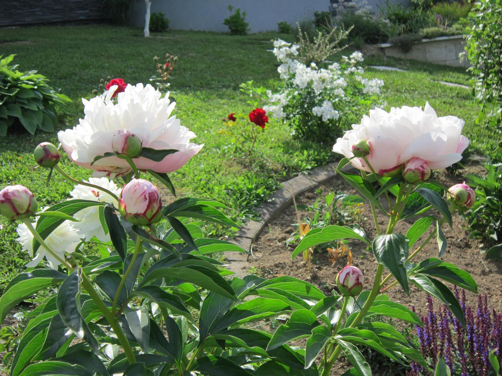 Pozvanie do našej jarnej záhrady - Obrázok č. 66