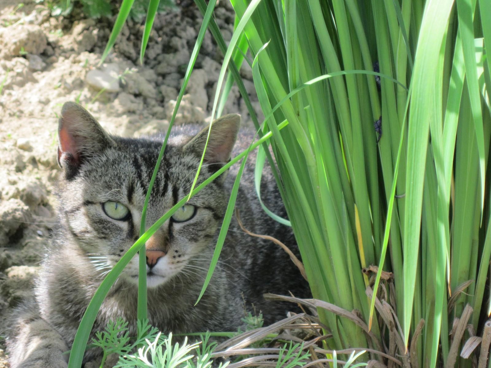 Pozvanie do našej jarnej záhrady - Aj ja farebne ladím v záhrade...