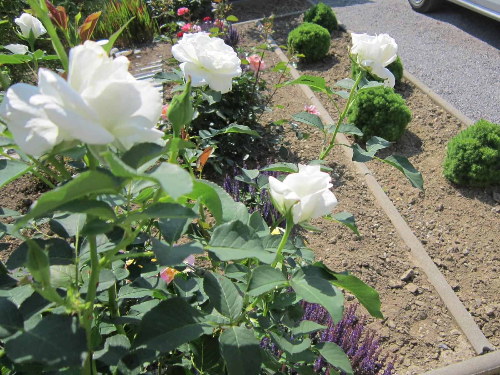 Pozvanie do našej jarnej záhrady - Obrázok č. 68