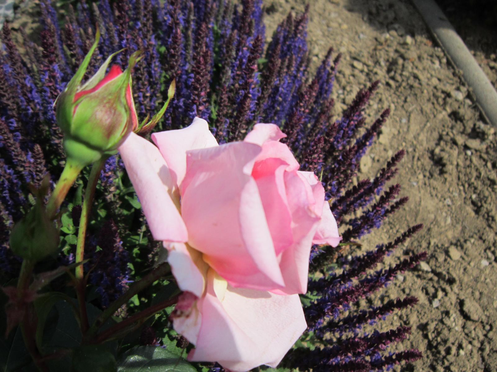Pozvanie do našej jarnej záhrady - Obrázok č. 69