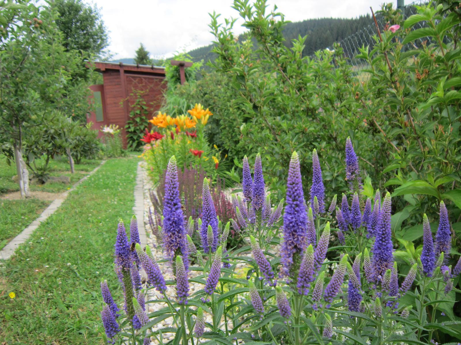 Pozvanie do našej jarnej záhrady - Veronika ma vždy poteší...