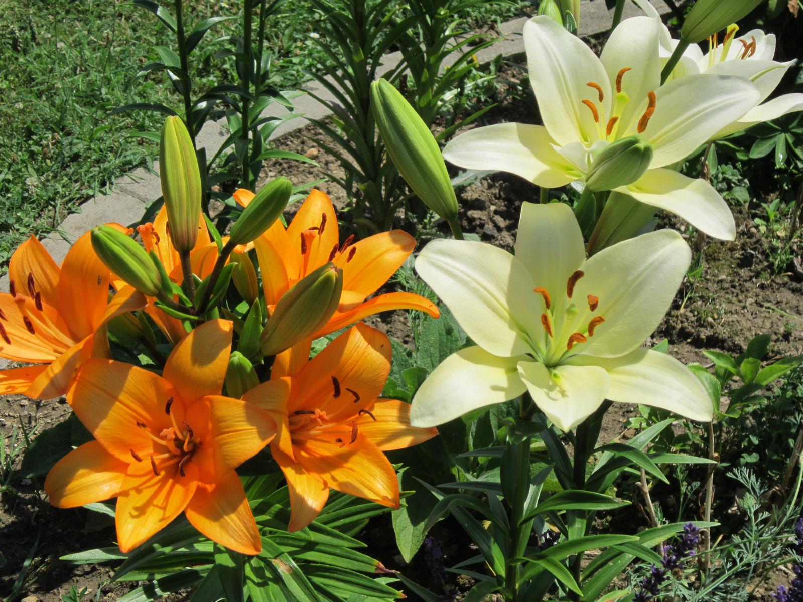 Pozvanie do našej jarnej záhrady - Obrázok č. 74
