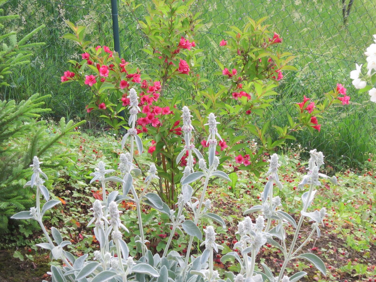 Pozvanie do našej jarnej záhrady - Obrázok č. 82