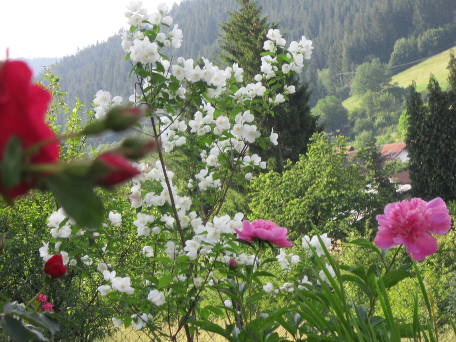 Pozvanie do našej jarnej záhrady - Obrázok č. 83