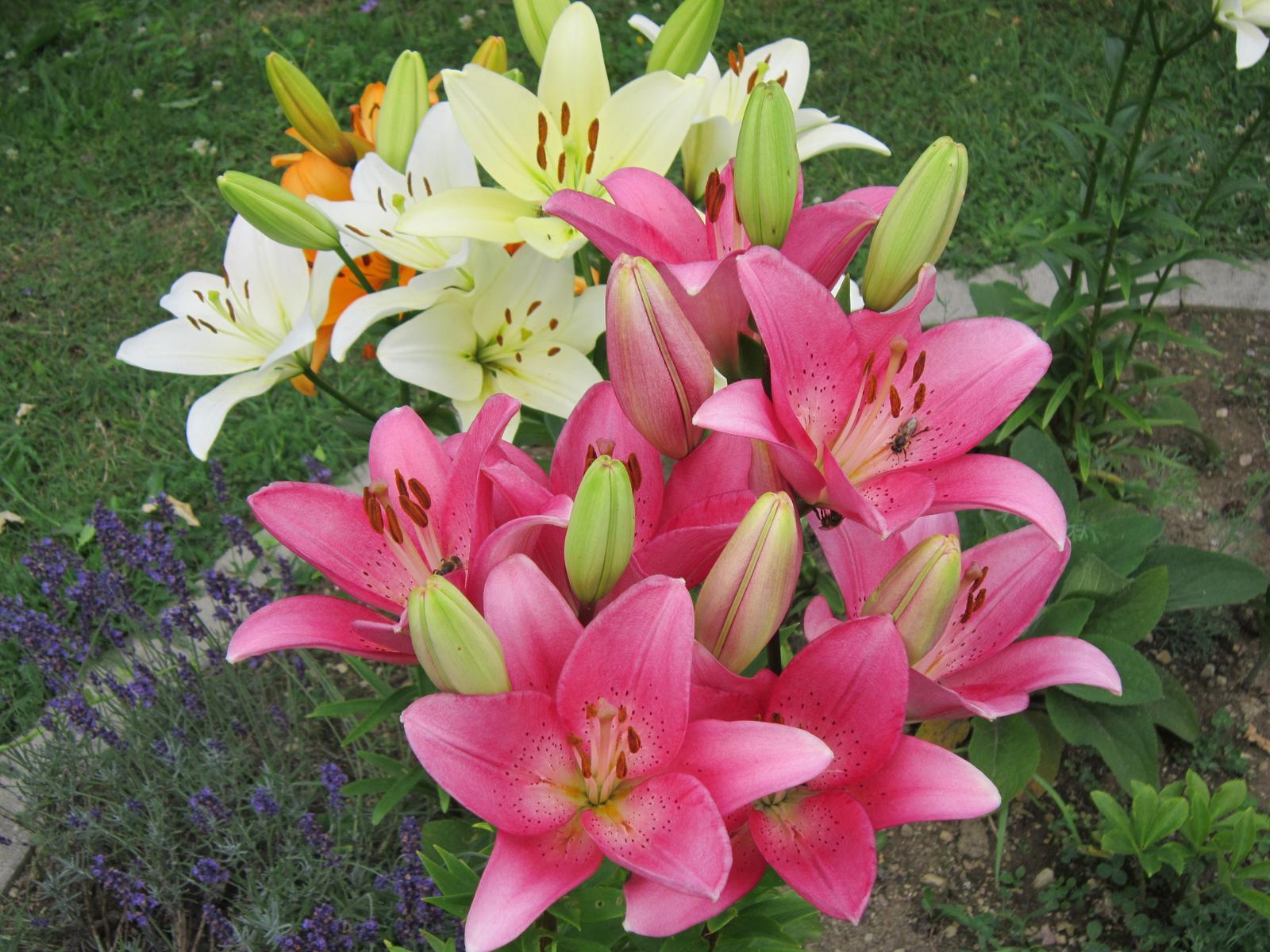 Pozvanie do našej jarnej záhrady - Veľmi príjemné farby...neviem sa na ne vynadívať...