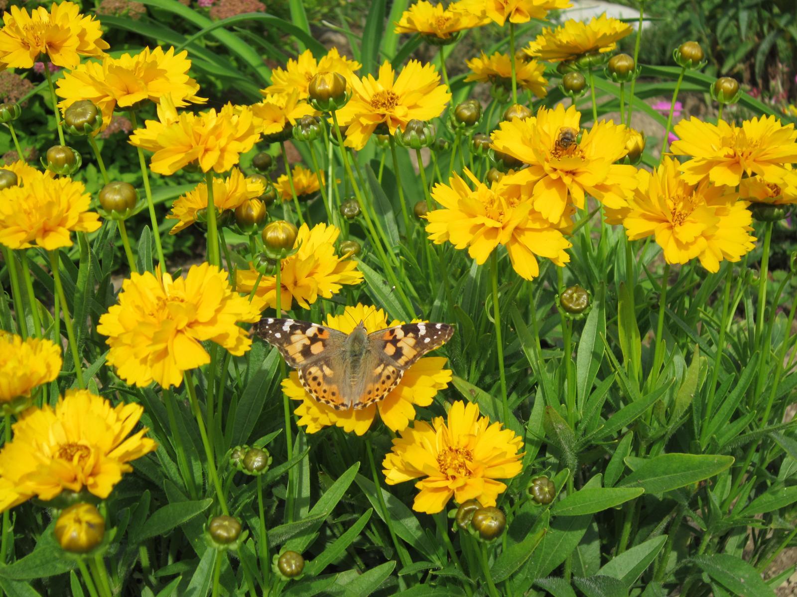 Pozvanie do našej jarnej záhrady - Obrázok č. 91