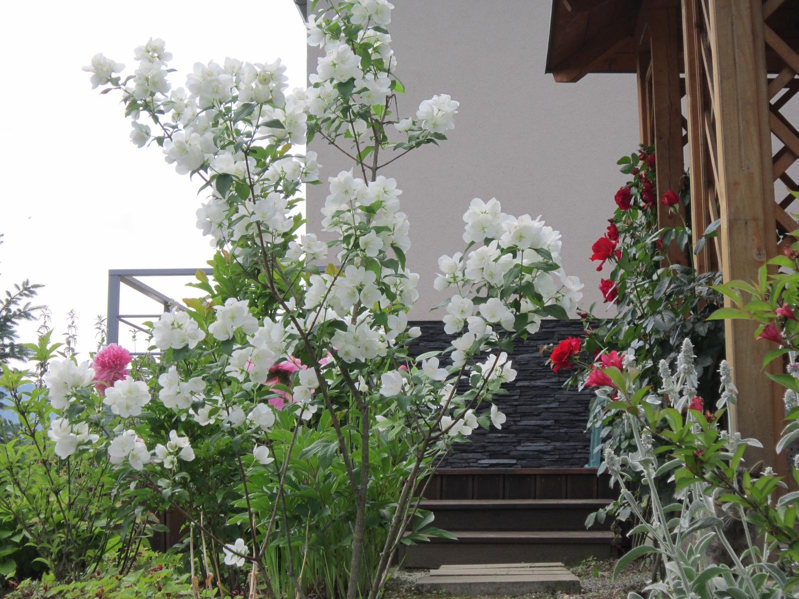 Pozvanie do našej jarnej záhrady - Obrázok č. 94