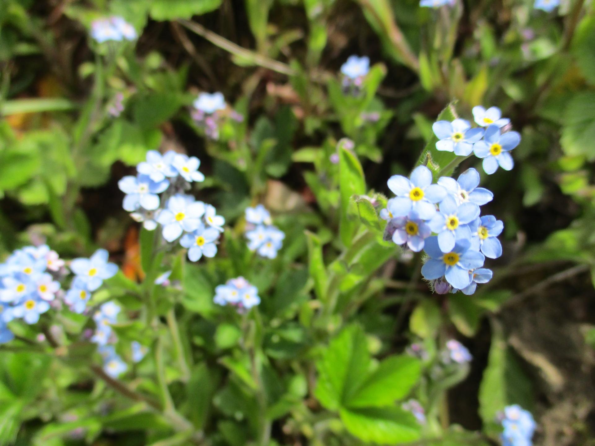 Čo je nové v našej záhrade - Nezabudni,že tu budeme,aj o rok ;-)