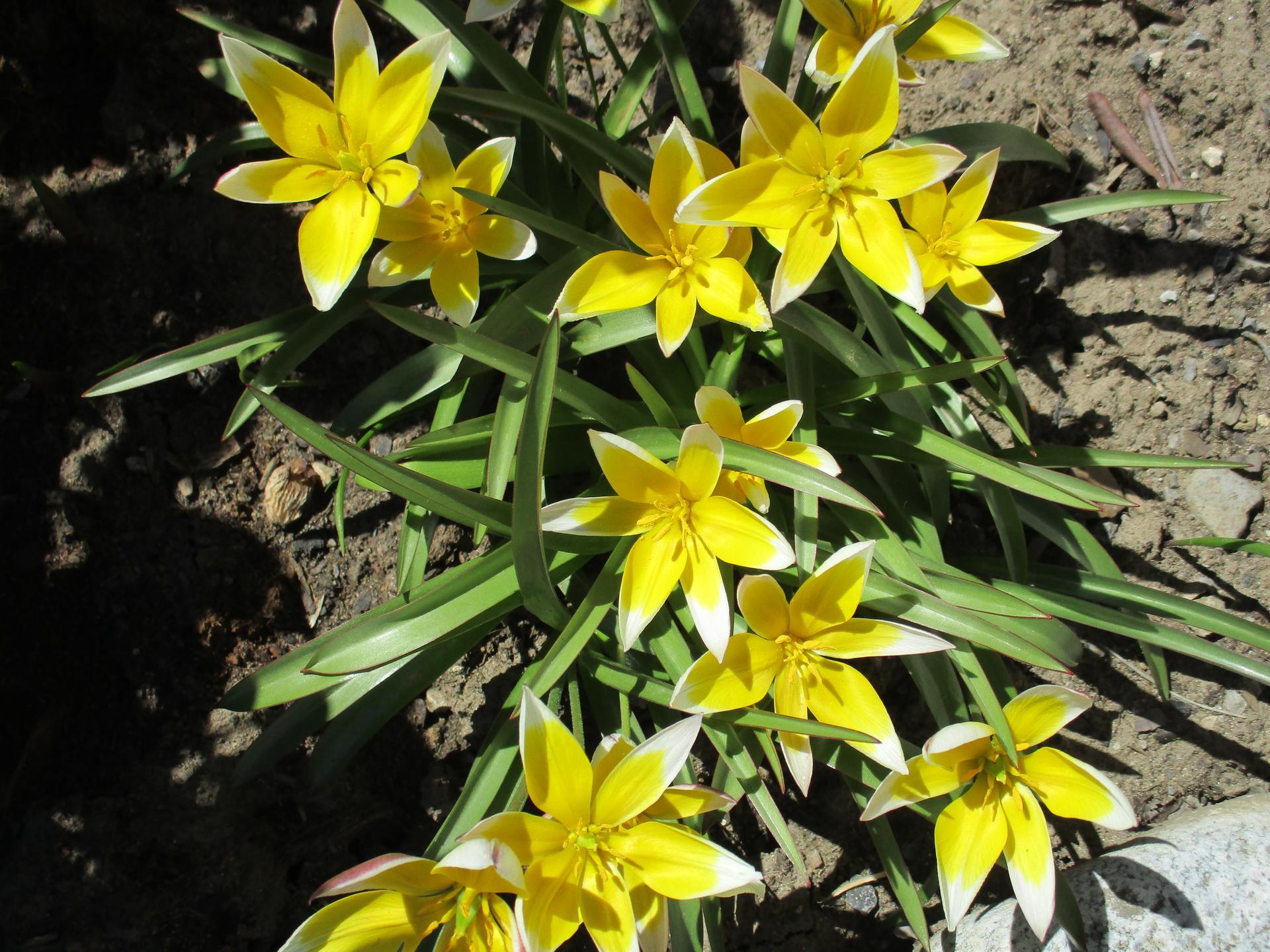 """Jar v našej záhrade - """"Bozky slnka""""...nemohli dostať krajší názov..."""