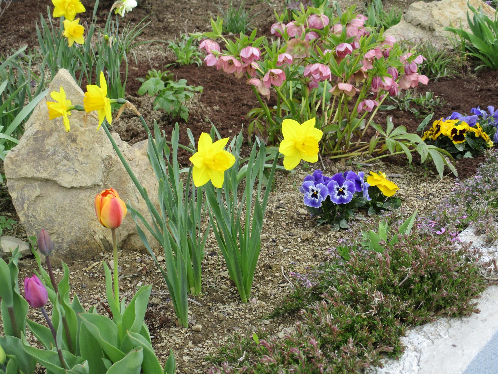 Jar v našej záhrade - Obrázok č. 6