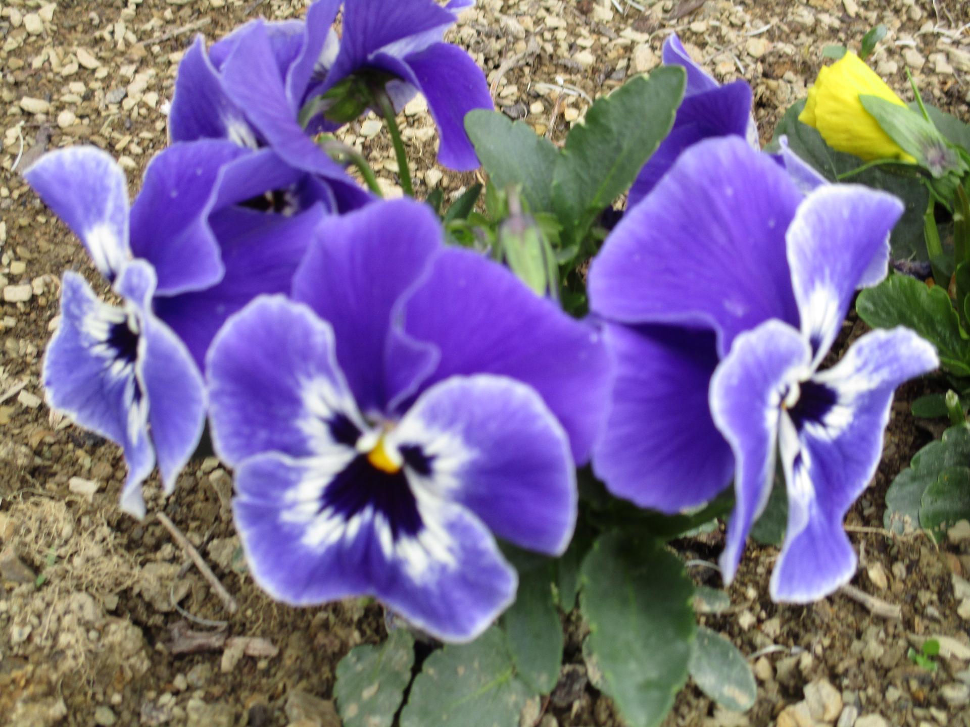 Jar v našej záhrade - Obrázok č. 7