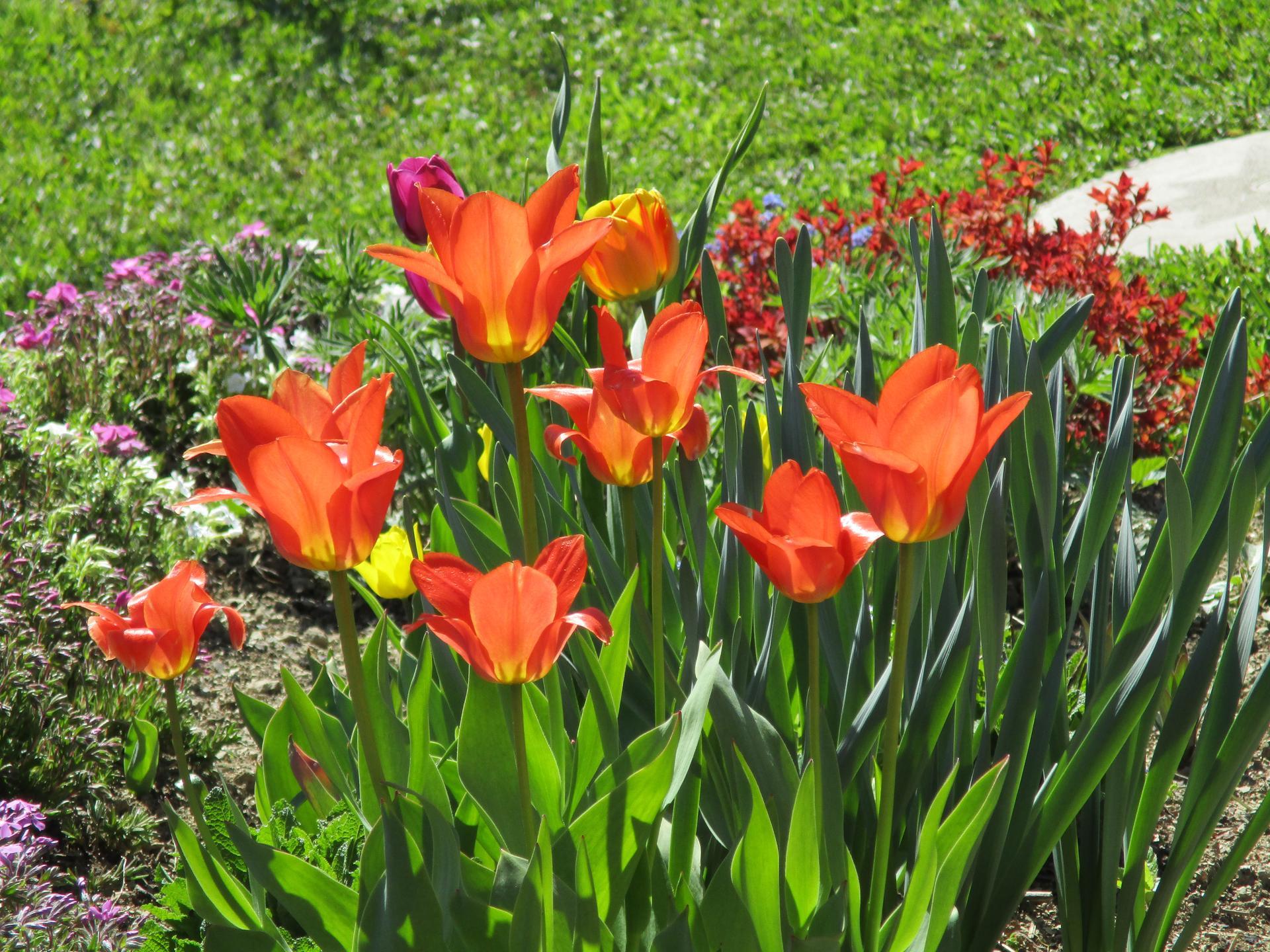 Jar v našej záhrade - Obrázok č. 8