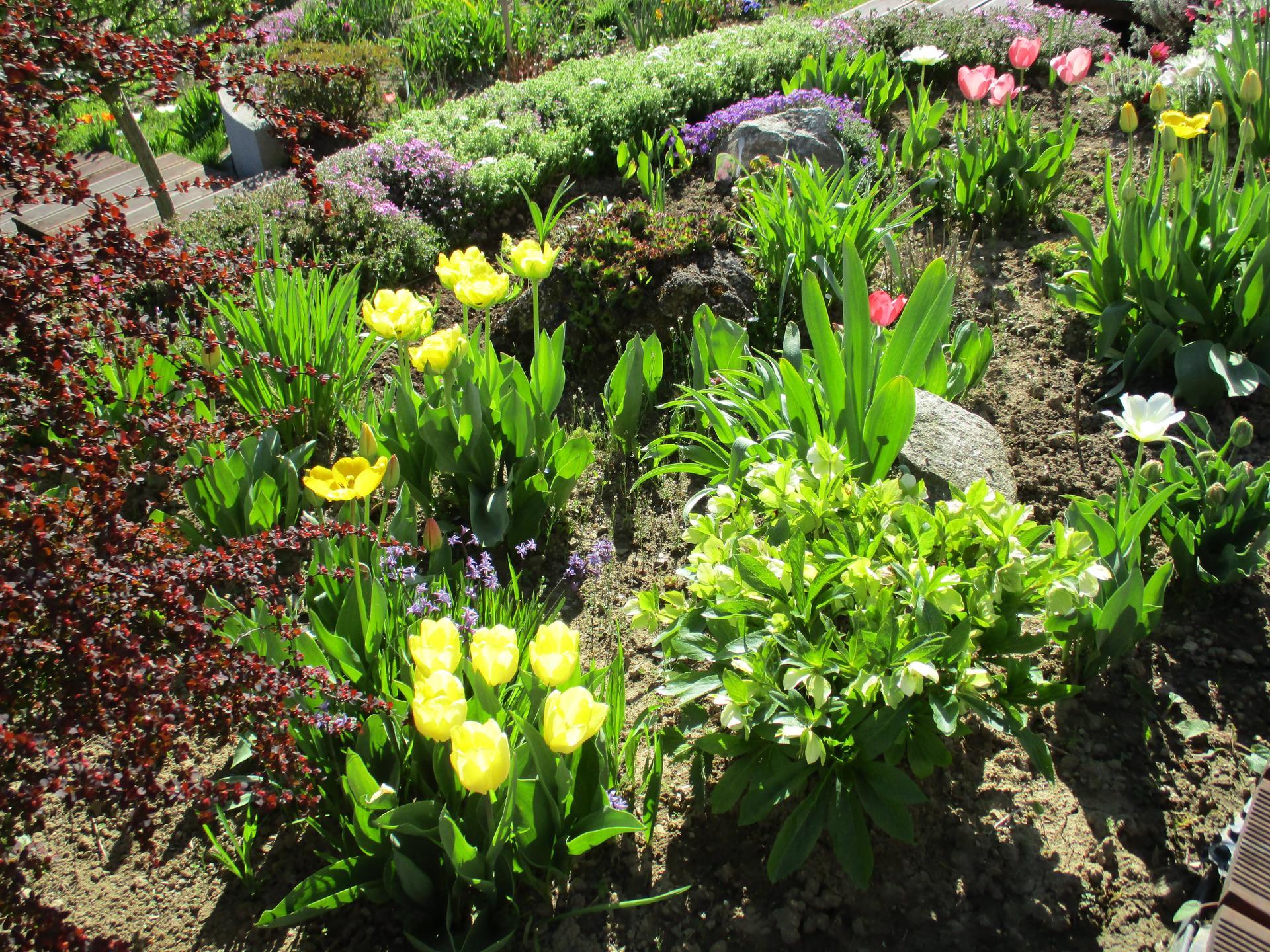 Jar v našej záhrade - Obrázok č. 9