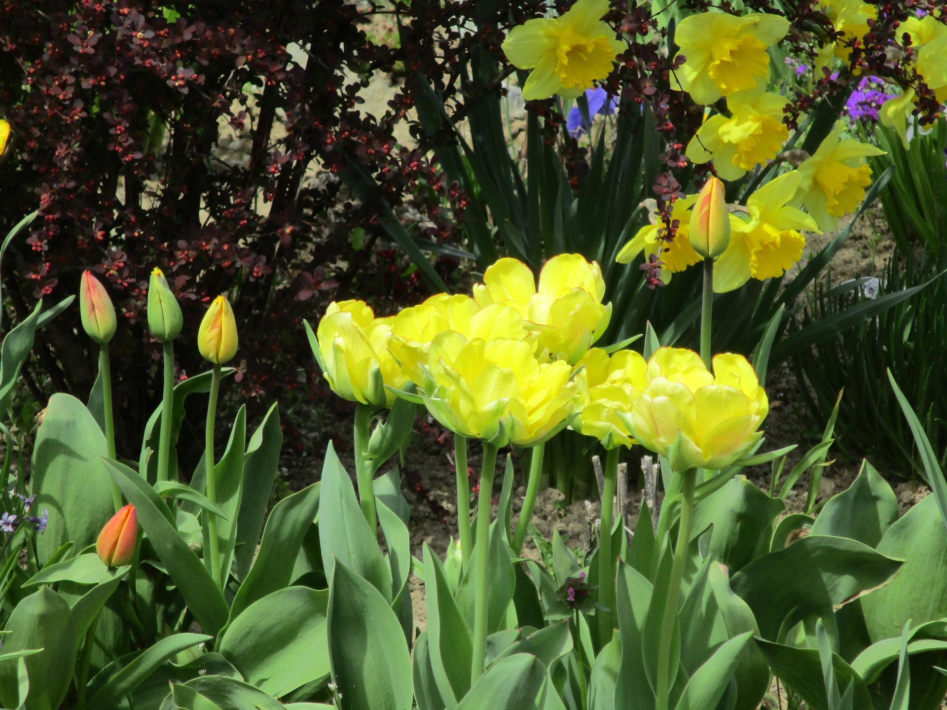 Jar v našej záhrade - Obrázok č. 11
