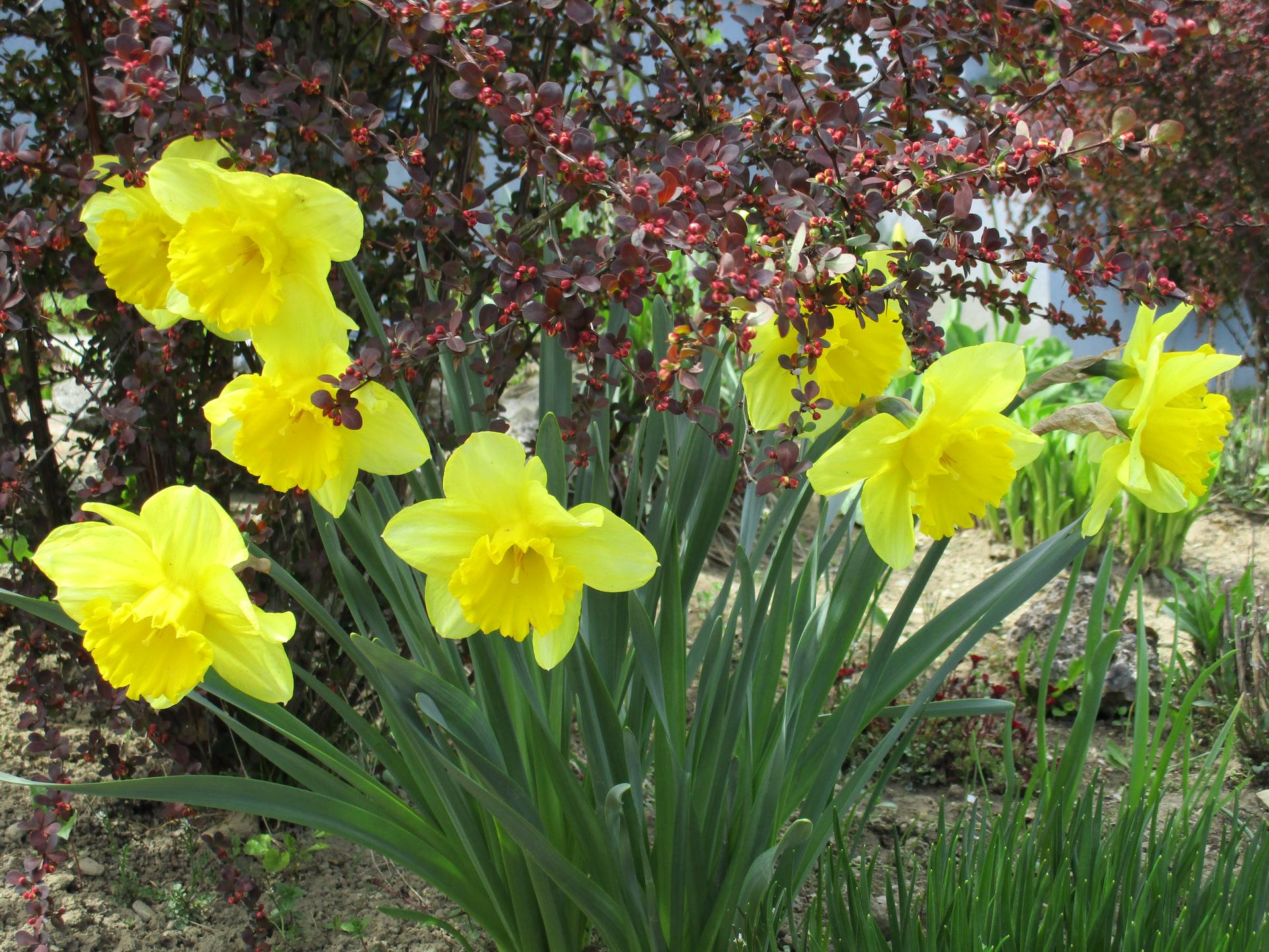 Jar v našej záhrade - Obrázok č. 12