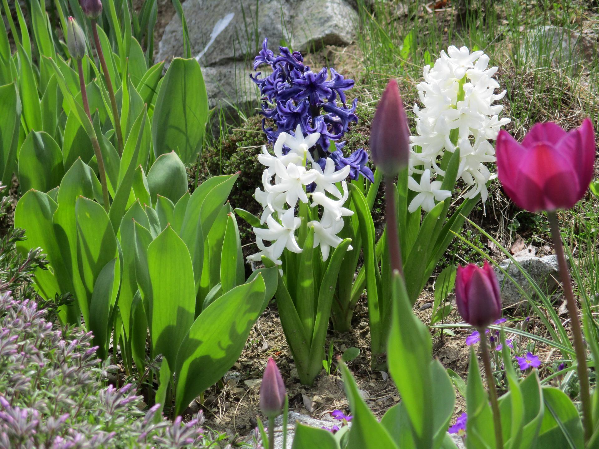 Jar v našej záhrade - Obrázok č. 13