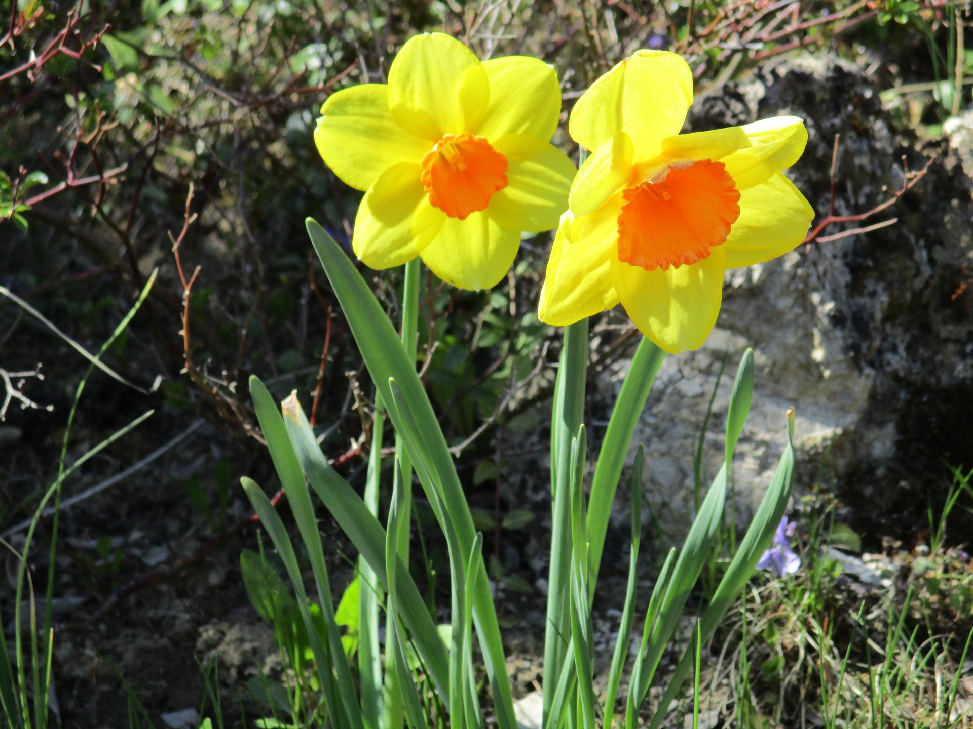 Jar v našej záhrade - Obrázok č. 14