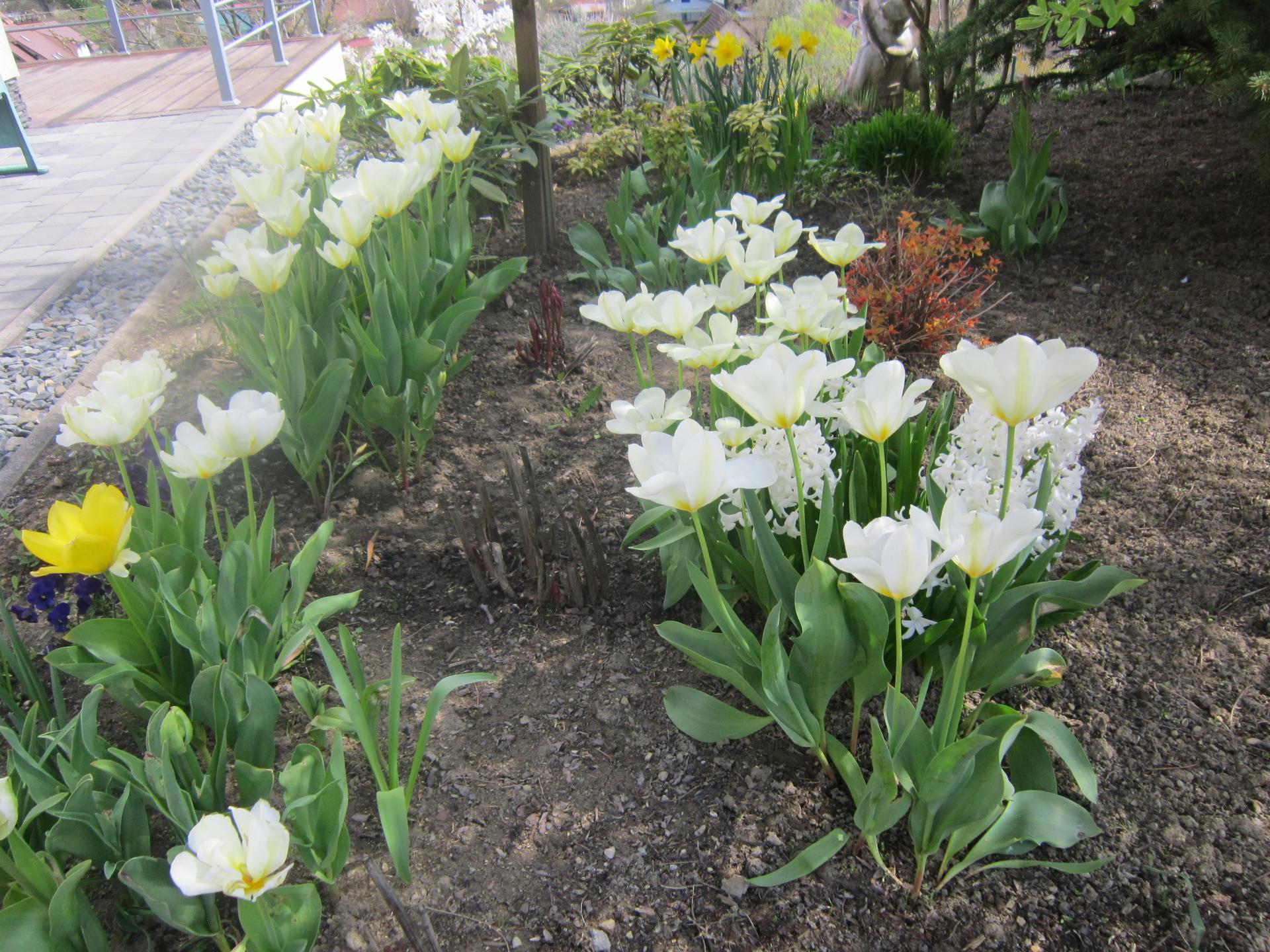 Jar v našej záhrade - Obrázok č. 15