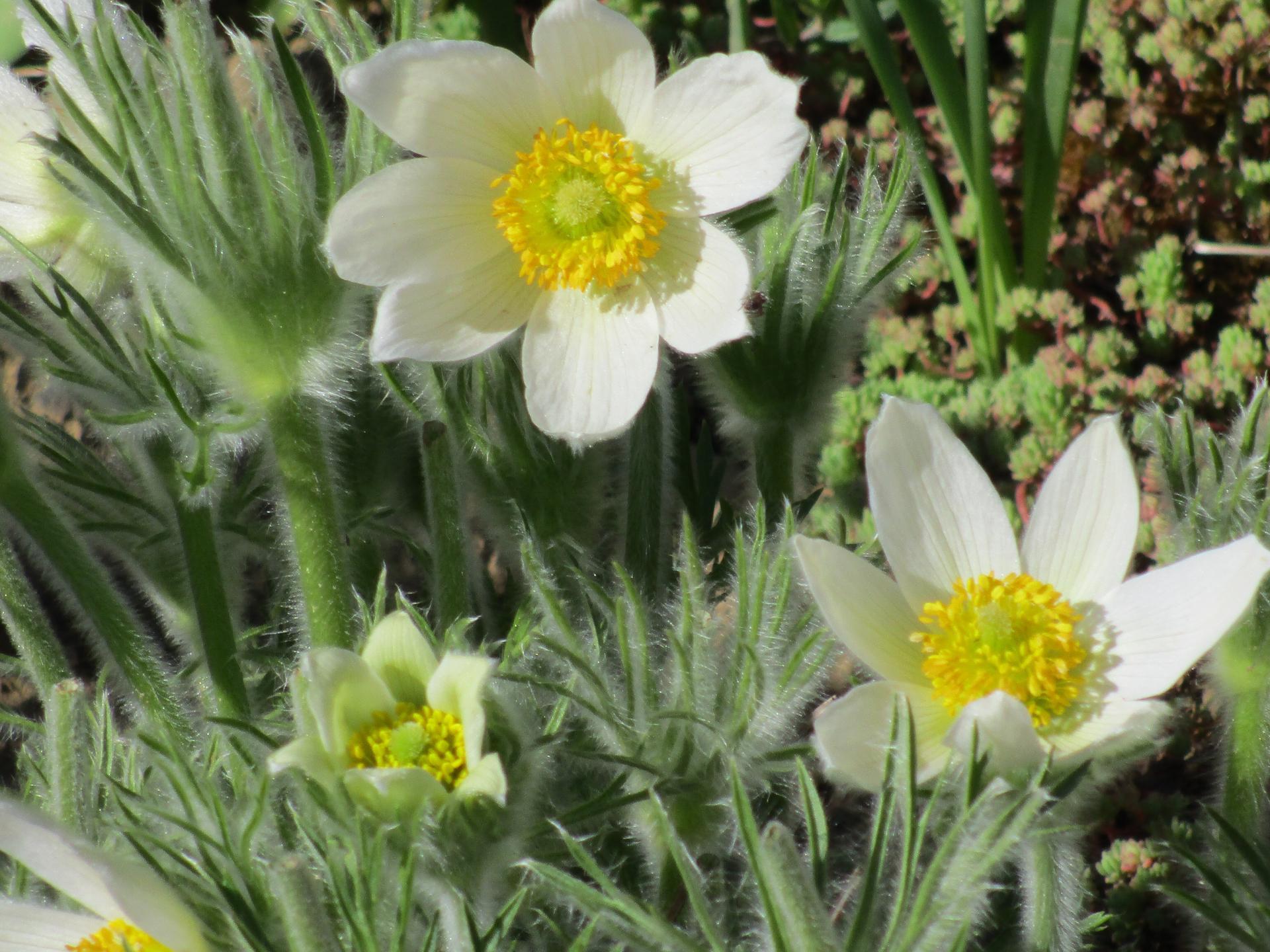 Jar v našej záhrade - Obrázok č. 19