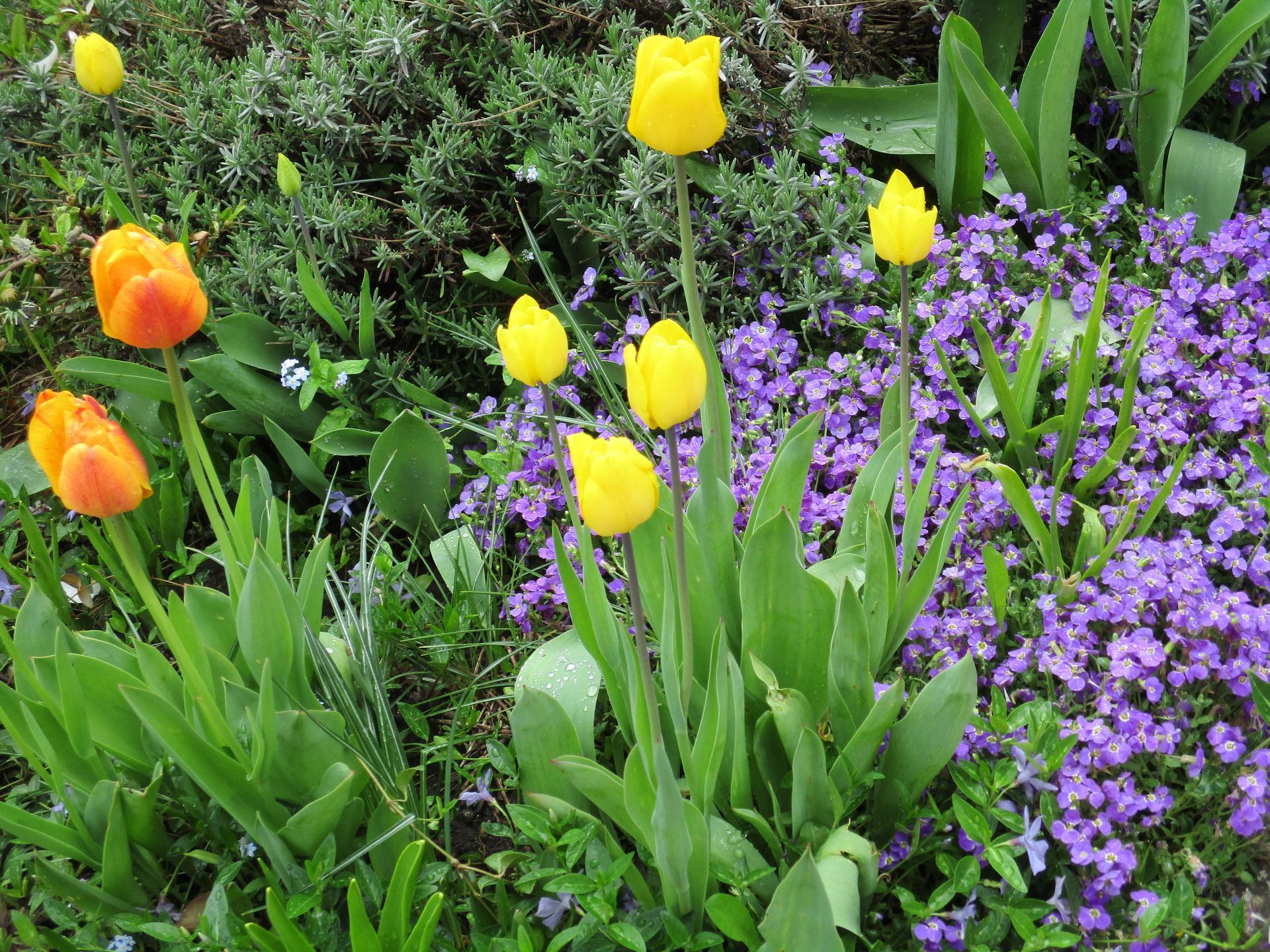 Jar v našej záhrade - Obrázok č. 21