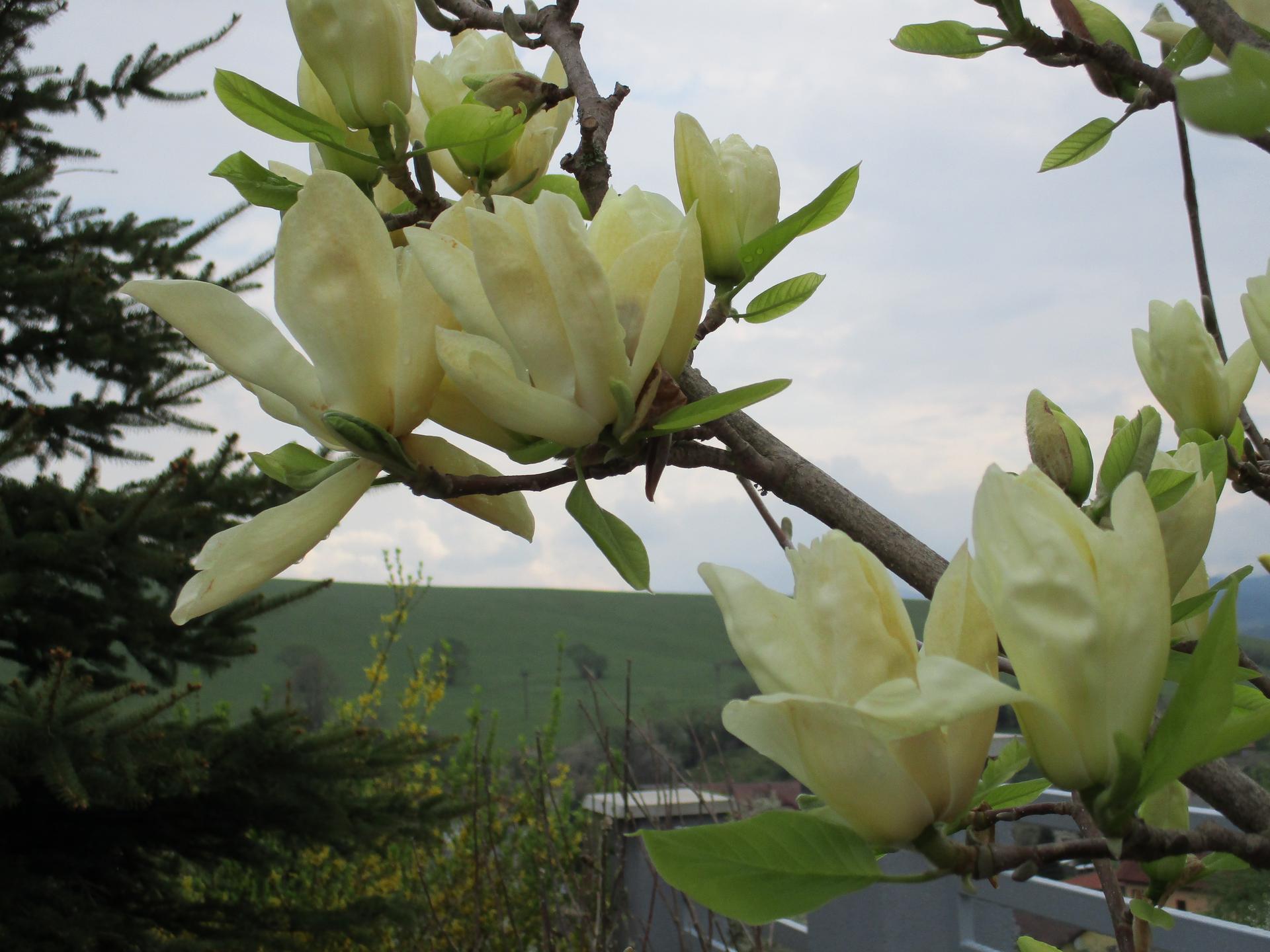 Jar v našej záhrade - Obrázok č. 24