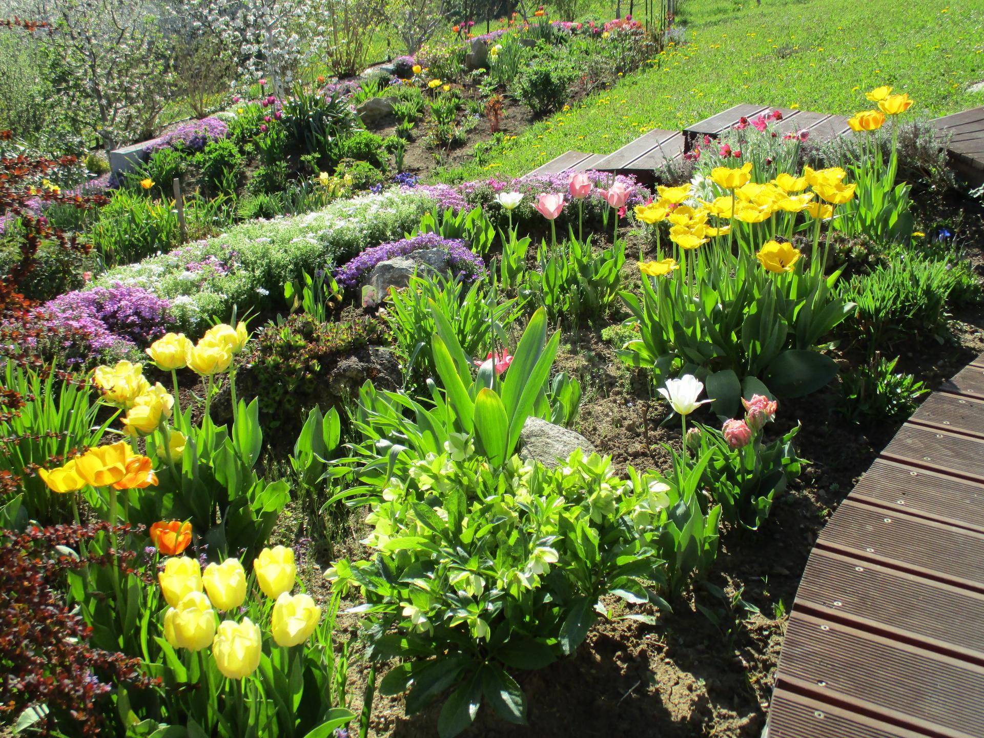 Čo je nové v našej záhrade - Obrázok č. 27