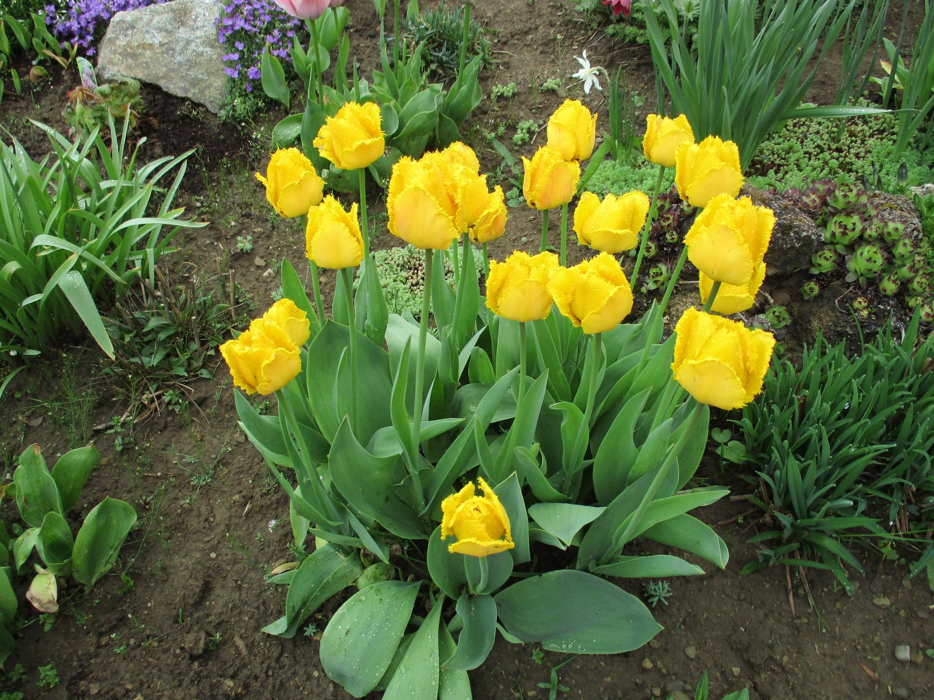 Jar v našej záhrade - Obrázok č. 34