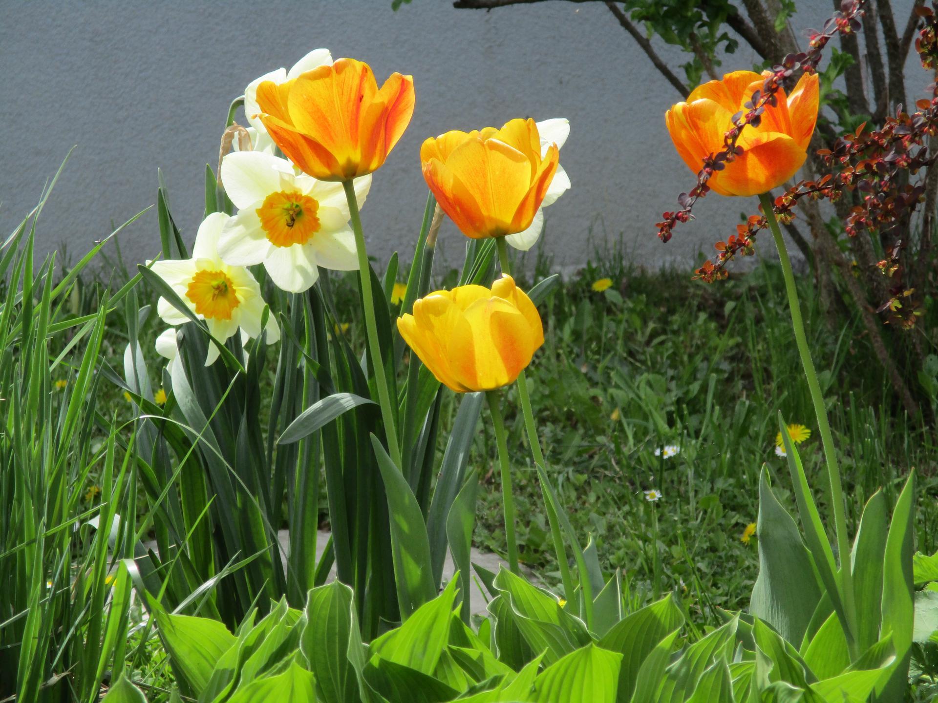 Jar v našej záhrade - Obrázok č. 45