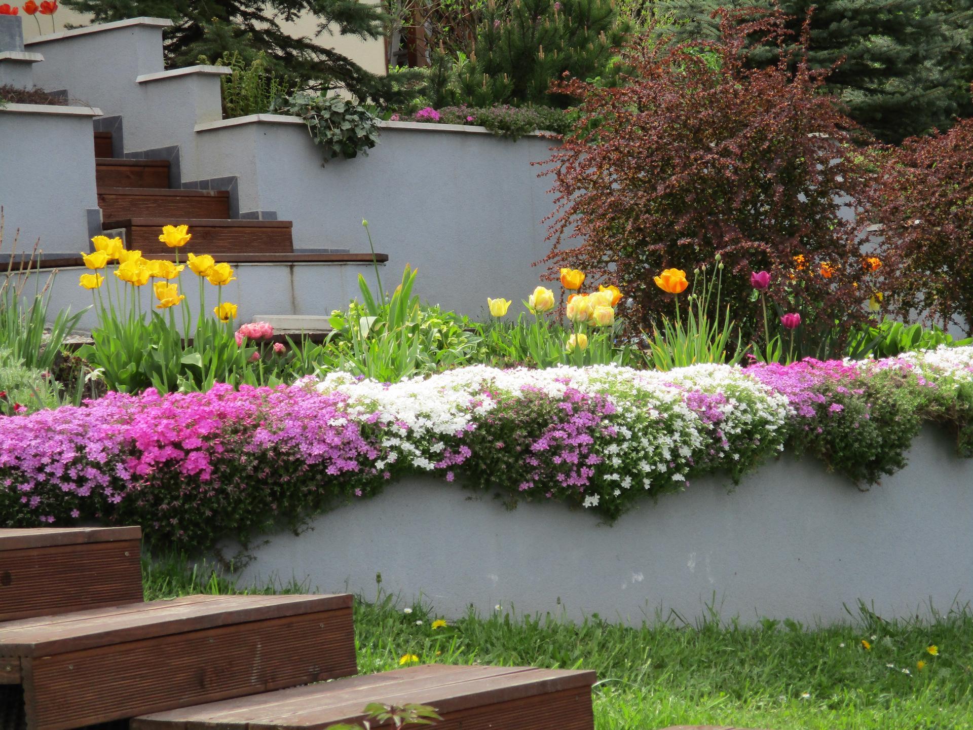 Čo je nové v našej záhrade - Obrázok č. 48