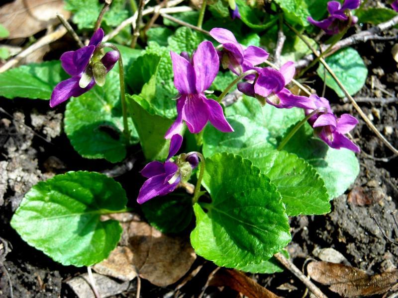 Jar v našej záhrade - Obrázok č. 49