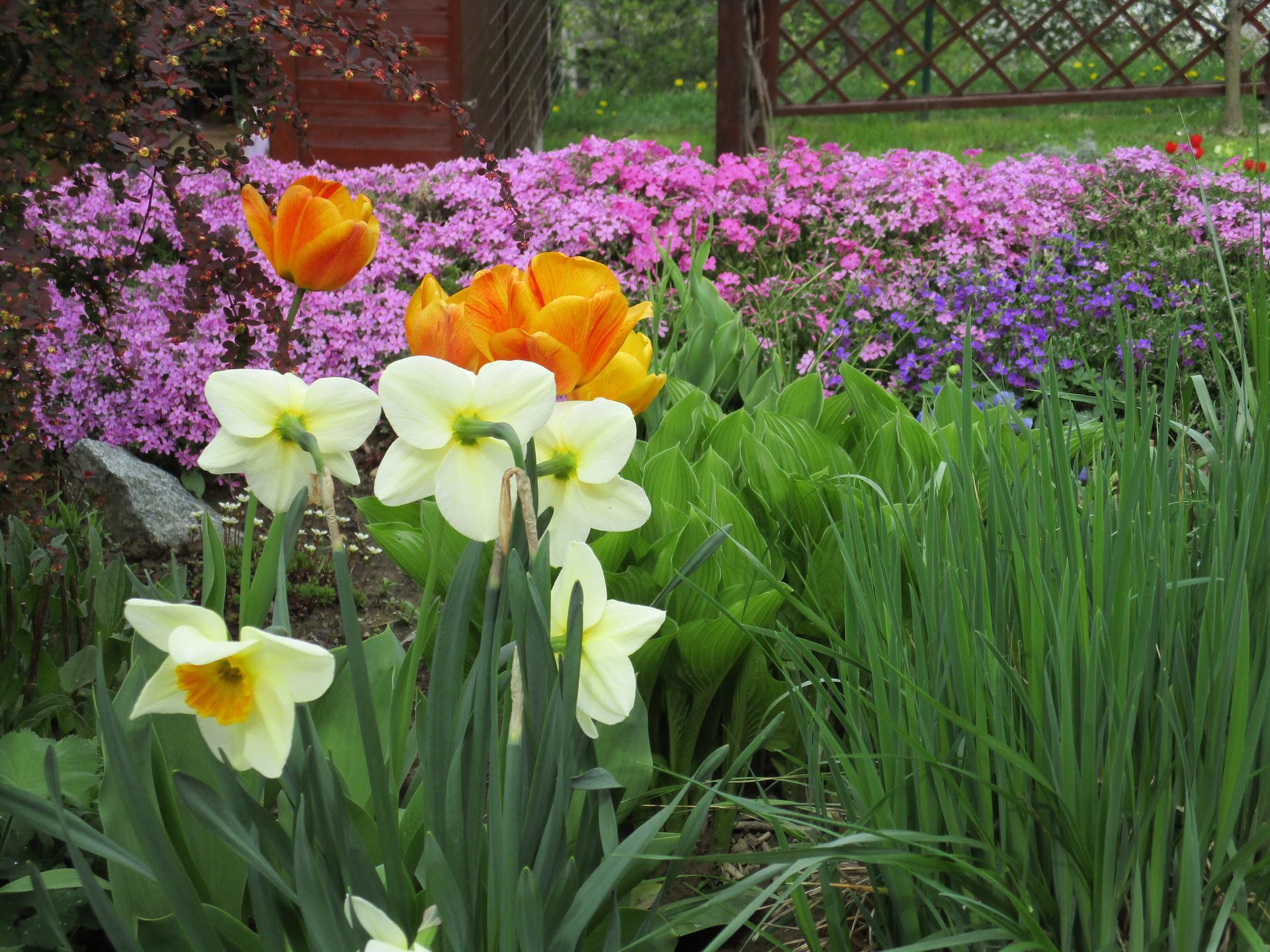 Jar v našej záhrade - Obrázok č. 50