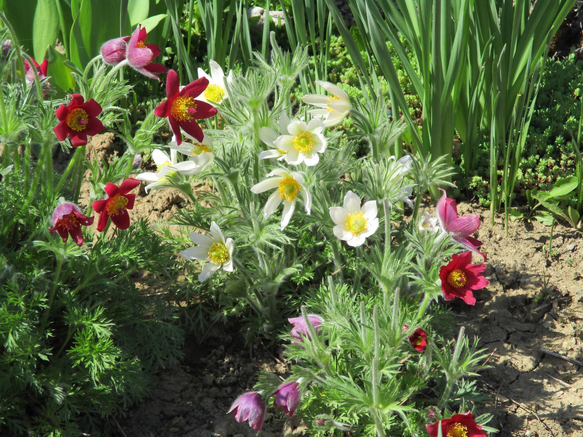 Jar v našej záhrade - Obrázok č. 52