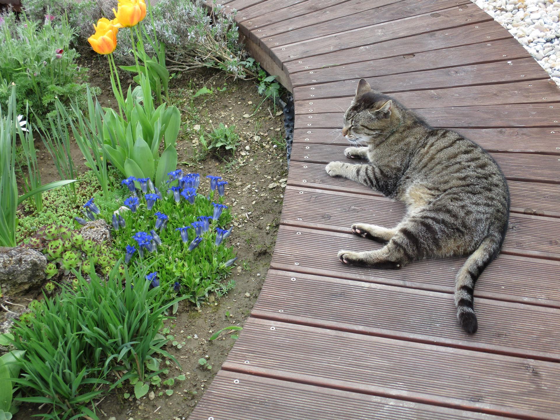 Jar v našej záhrade - Náš Timur stráži modré horce :-D